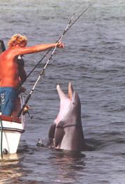 dolphin watch Panama City - feeding wild dolphins